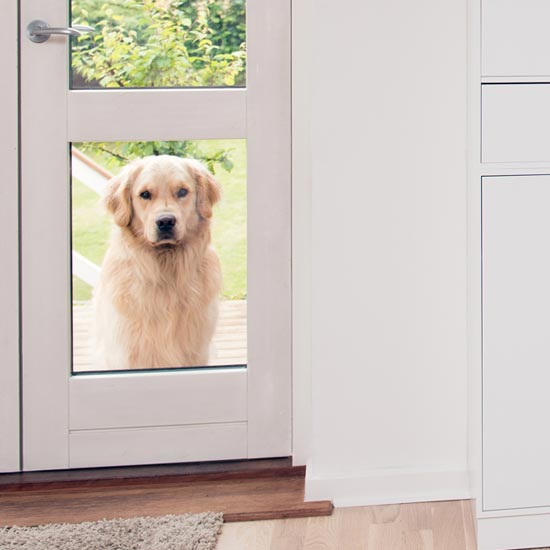 Pet Doors Services in London